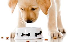 Koiranruoka
